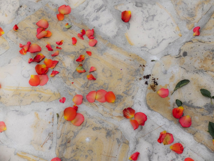 Flower petals strewn on rock surface | Asilomar Conference Grounds | Pacific Grove, California